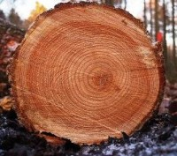 image - tree rings