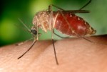 West Nile virus deaths in SD: 2003 ­ 14; 2010 ­ None; This year ­?