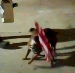 Occupationist: American Flag Makes a Good Dog Toy